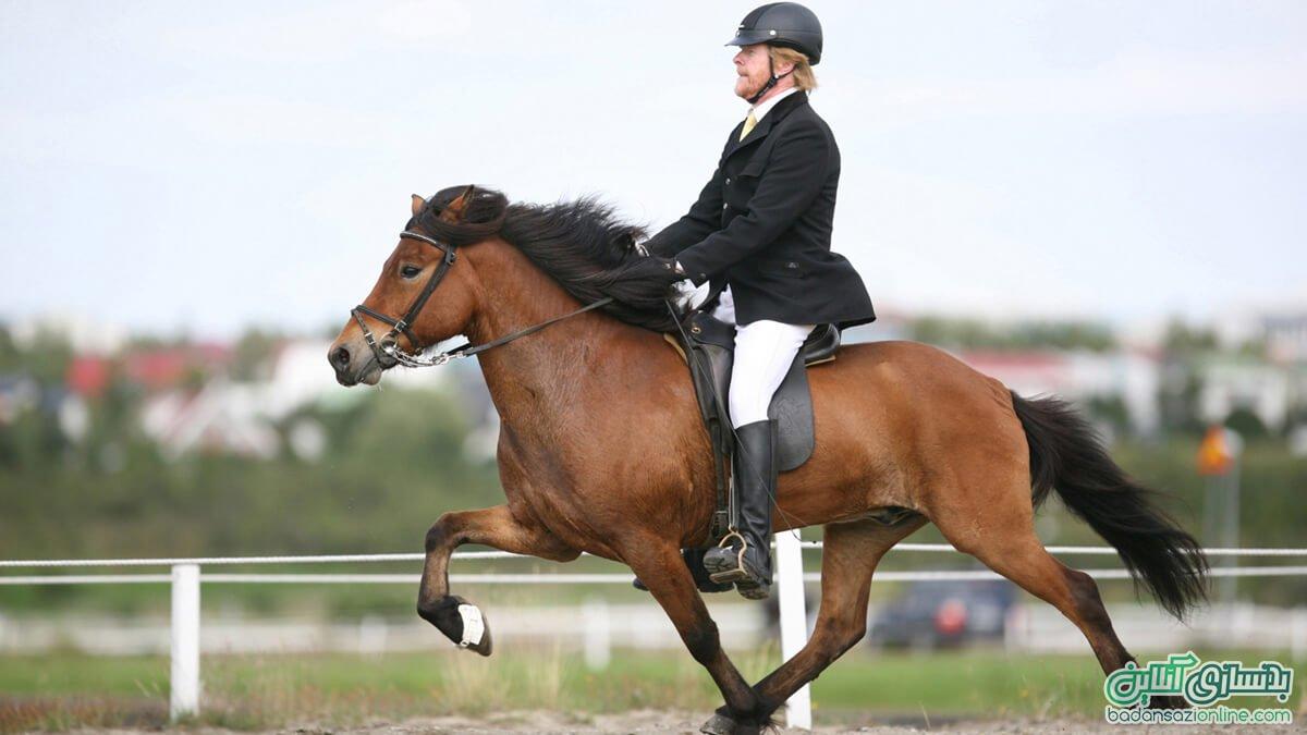 باشگاه های سوارکاری و اسب سواری