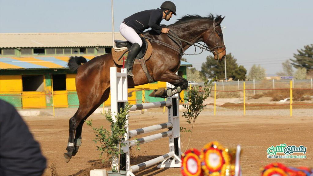 سوارکاری اسب سواری بوشهر